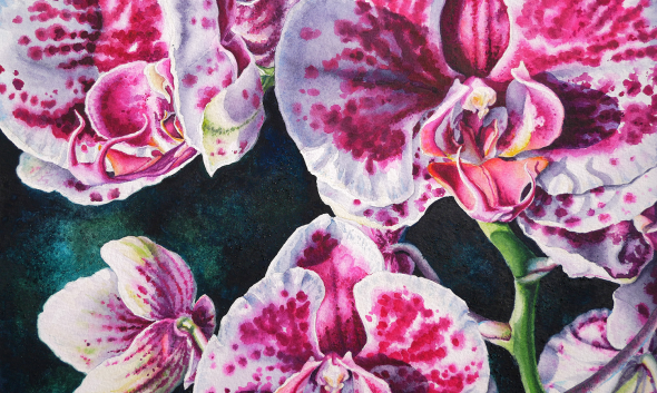 Pink White Orchids #2 Watercolor
