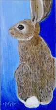 """Cottontail"""