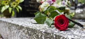 rose-464129_1920-750x500