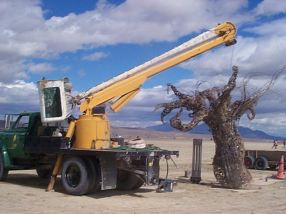 Crane with tree