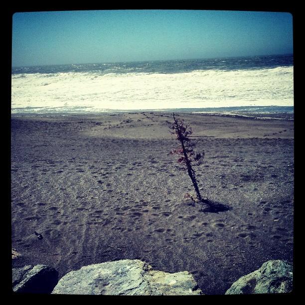 Sharp Park, Pacifica #travel #photography #ocean #landscape #California