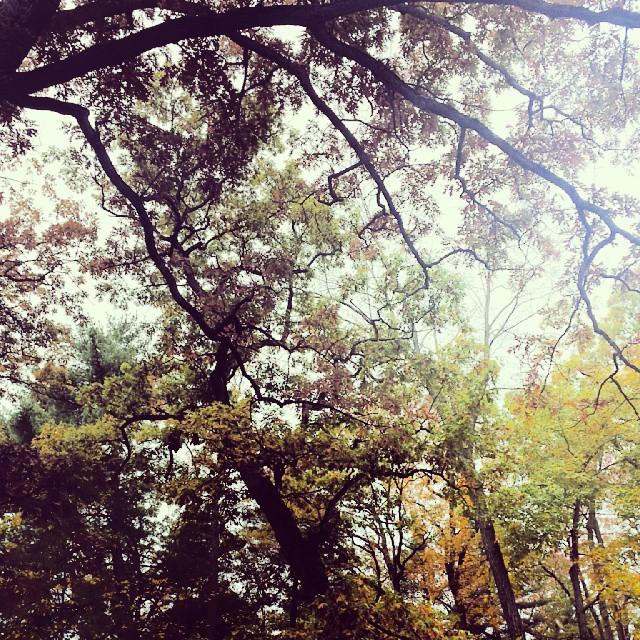 Autumn Splendor #connecticut #autumn #colors #trees #newengland