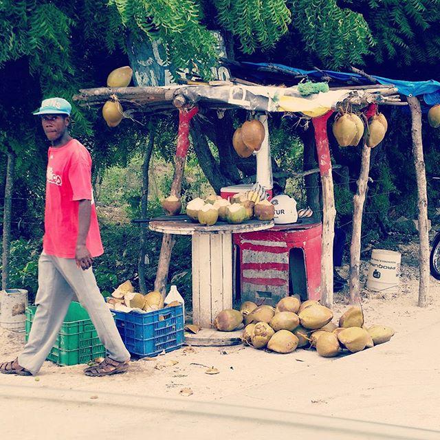 Roadside Coconut Stand #puntacana #domincanrepublic #putthelimeinthecoconut #locavore