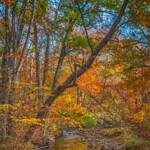 Autumn Stream Fine Art Prints by Michelle Lazur