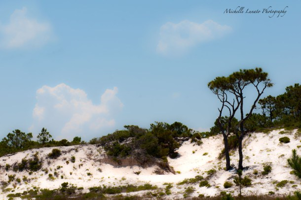 The dunes of Saint George Island