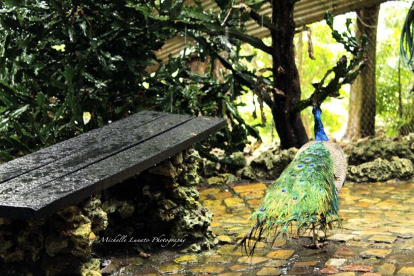 Barbados Zoo