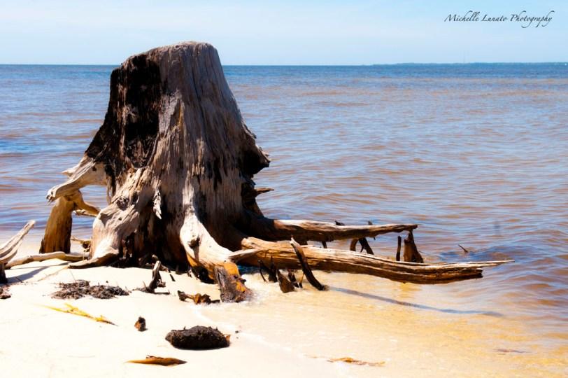 Interesting stumps were around the small campsite beach.