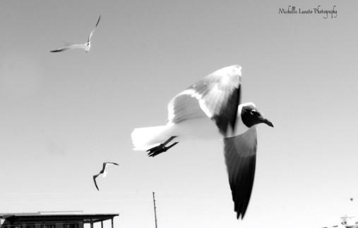 MM 3-16 Movement MLunato Photography