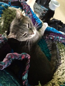 Cat enjoying laying on rag rug
