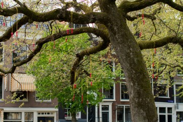 the rare and magical jump-rope tree
