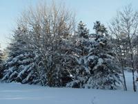 January_snow_028