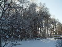 January_snow_031