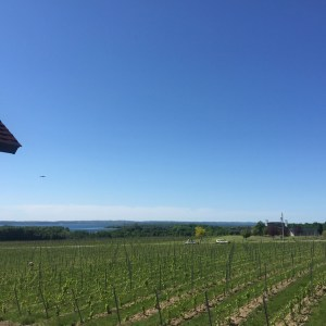 Bonobo Winery Traverse City Michigan