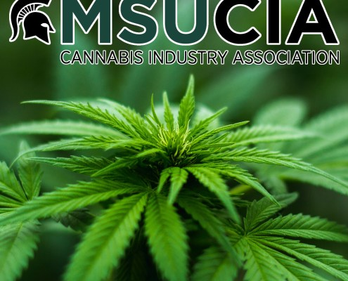 MSU Cannabis Industry Association