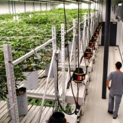 Redbud Roots Growing Facility