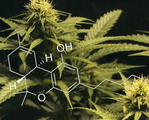 Medical Marijuana Research - Cannabis Molecule