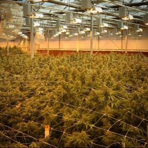 Pincanna Grow