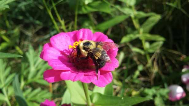 MHL-Lifestyle-Tending the Bees
