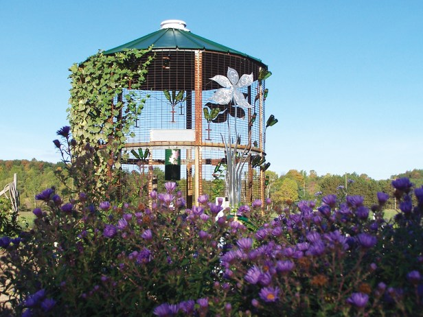 Native Michigan Asters in the Fall