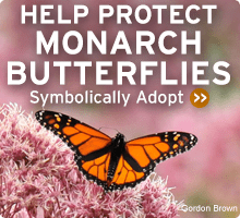Be a Butterfly Hero. Submit a Photo and Help Save the Monarch Butterfly