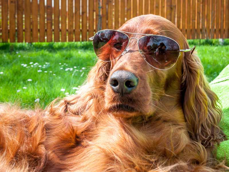 How Safe is Your Dog This Summer? {Interview}