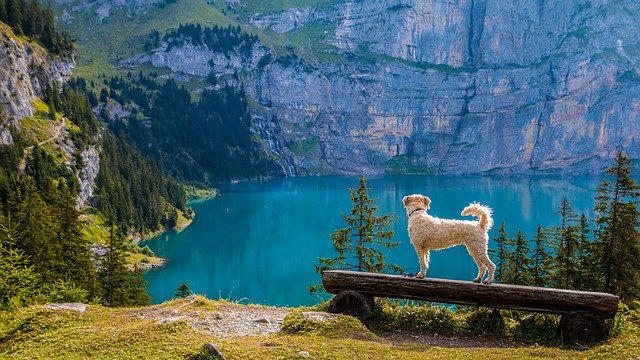 What Breed Of Dog Should You Get If You Love The Great Outdoors?