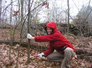 Volunteer Kali Bird cuts buckthorn at Columbia Nature Sanctuary in Jackson County