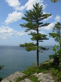 White Pine-Lk Sup.