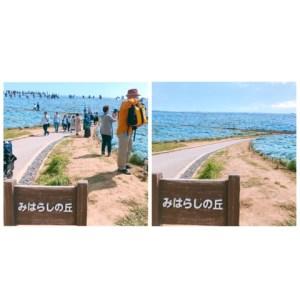 ひたち海浜公園のネモフィラを、混雑することなくほぼ独り占めしてきた