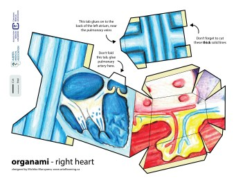 RIGHT side 3D heart-01