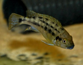 2014-10-25-fish-1-005