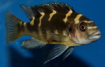 2014-10-25-fish-1-011