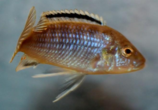 2014-10-25-fish-1-020-2