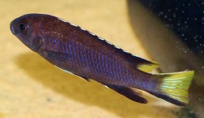 2014-10-25-fish-1-036
