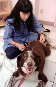 seguro veterinario, seguro de perro