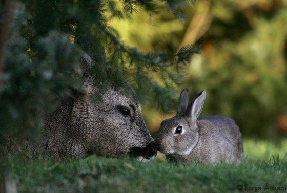 rabbitadvocacy