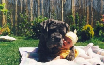 Perro y niño abrazados