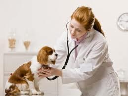 embarazo psicológico en perros-micompi.com