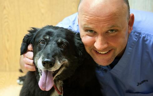 Seguro de Salud para Perros