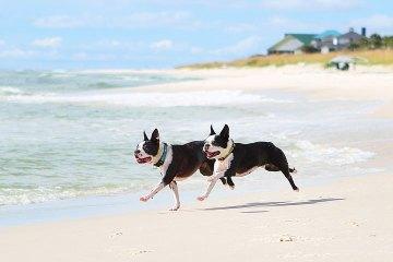 Playas para perros que se autoriza llevar perros