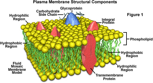 Plasma Cell Composition