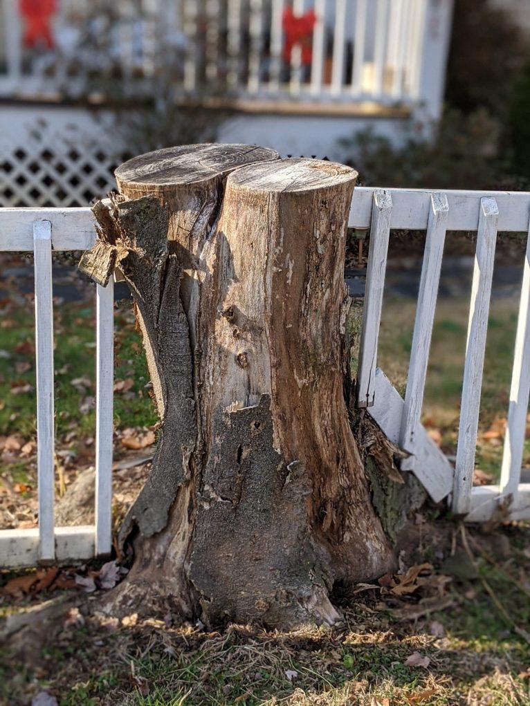 Tree stump as fence post.