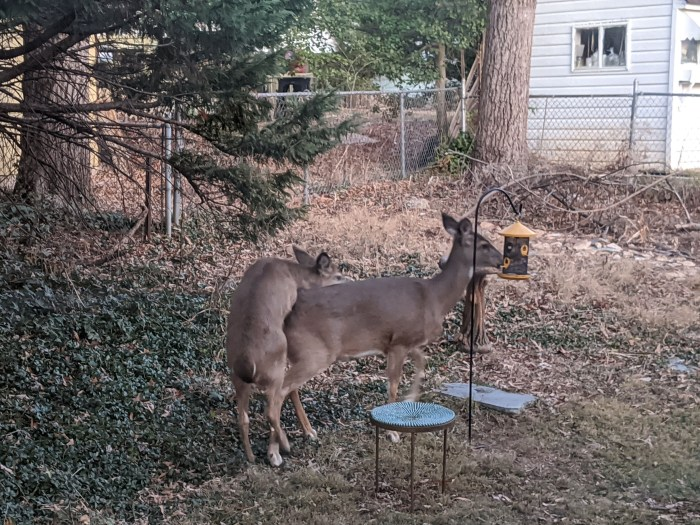 Two deer eating out of a hanging bird feeder.