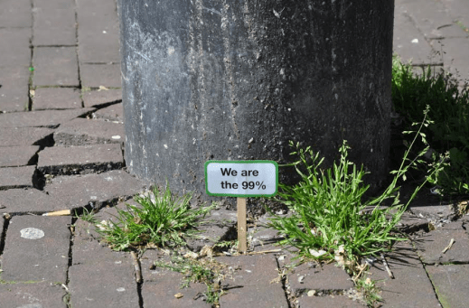 Plant activism in Amsterdam