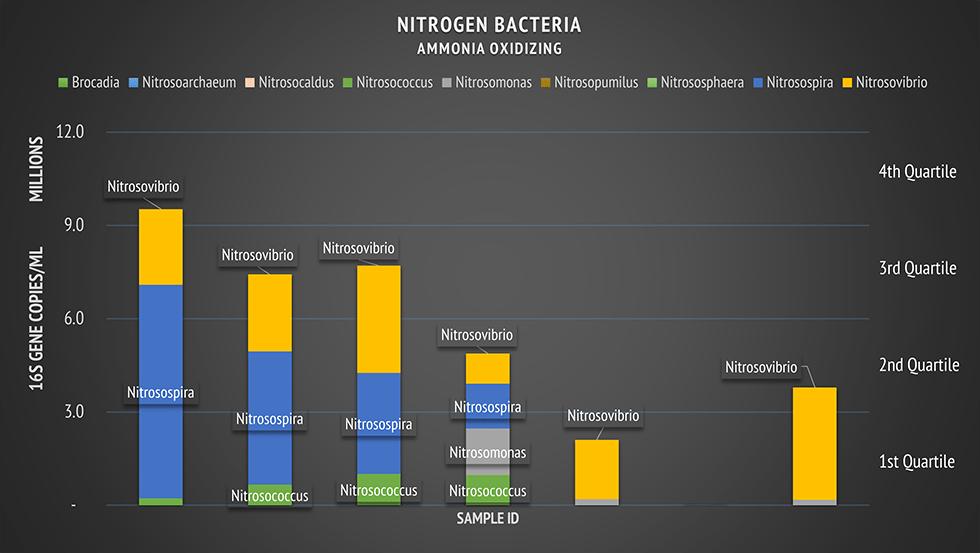 nitrogen bacteria ammonia