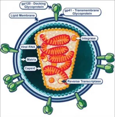 HIV Virus Structure