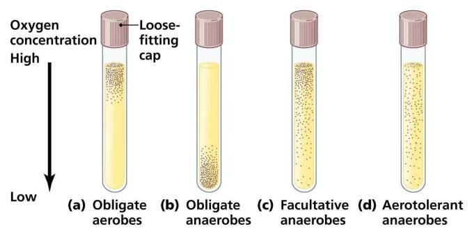 Oxygen requirements of bacteria