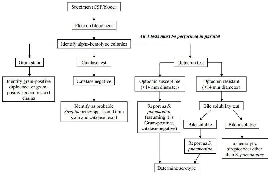 How to identify Streptococcus pneumoniae? - Microbeonline