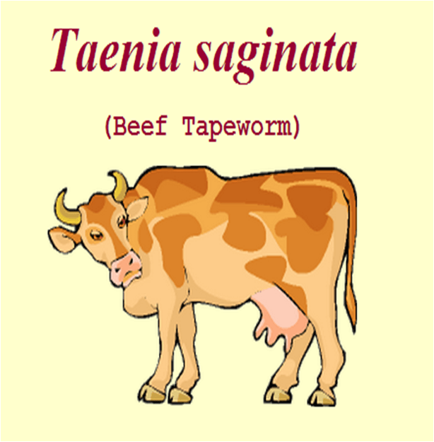 Difference Between Taenia Solium And Taenia Saginata
