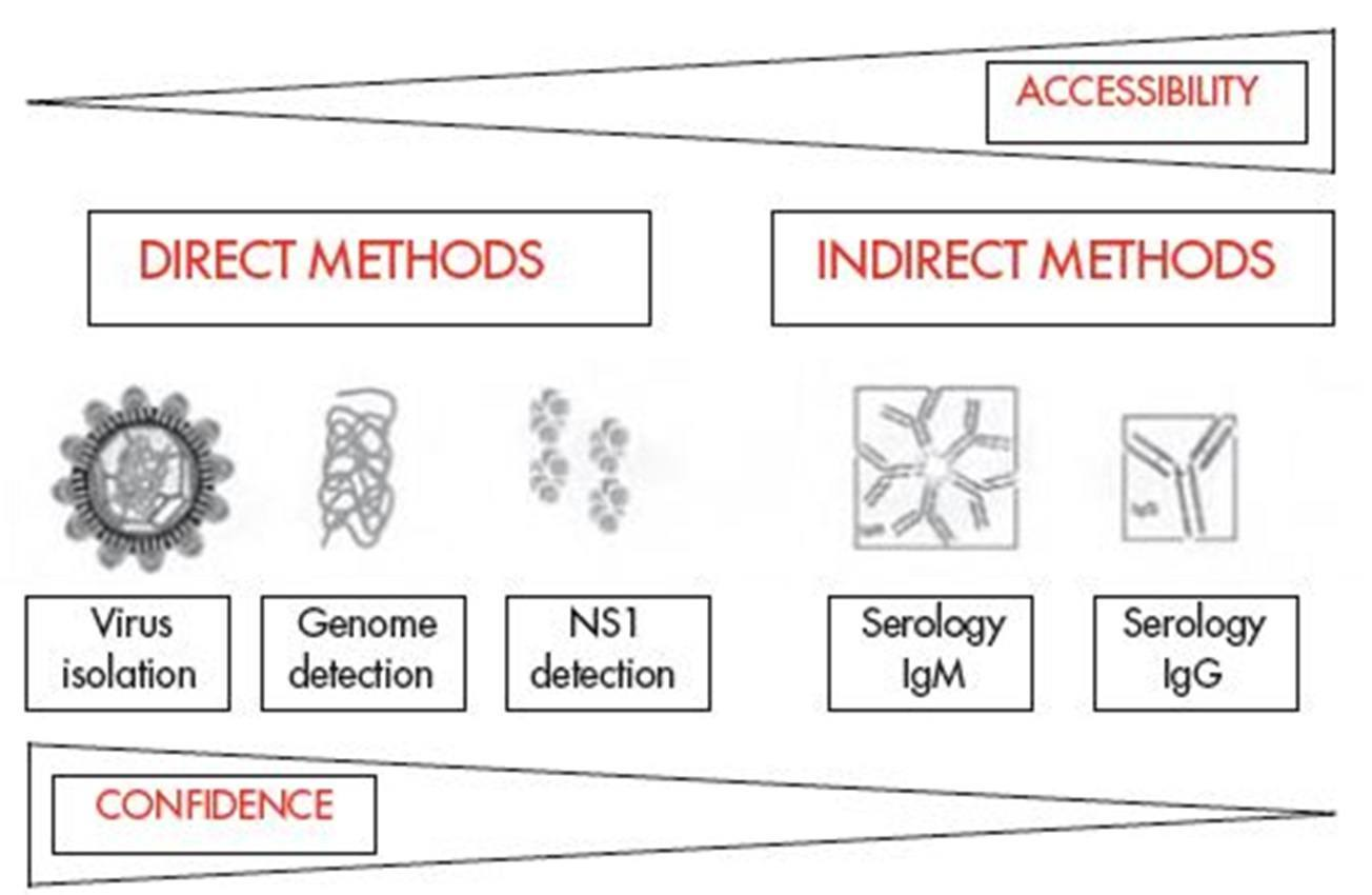 Laboratory Diagnosis of Dengue Viral Infection - Microbeonline
